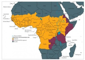 gulfeber-afrika
